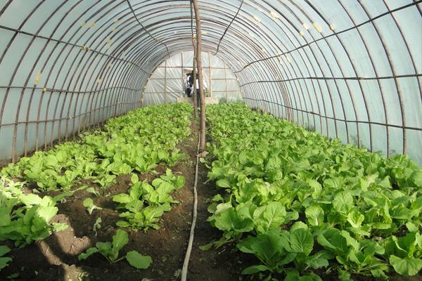 2018年在在农村投资什么项目好?农村创业好项目让你快速赚钱